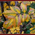 kolory jesieni #drzewa #jesień #kolory