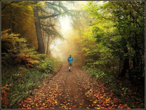 Srebrna Droga (szlak fioletowy) z Przełęczy Walimskiej na Przełęcz Sokolą #DolnyŚląsk #drzewa #góry #GórySowie #jesień #las #PrzełęczSokola #PrzełęczWalimska #SrebrnaDroga #Sudety #SzlakFioletowy #WielkaSowa