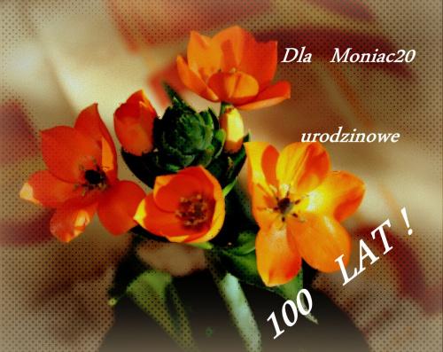 Wszystkiego najlepszego Moniko w dniu tak ważnym dla Ciebie Ci życzę; rozwijaj dalej swoje pasje i bądź szczęśliwa ! 100 lat !