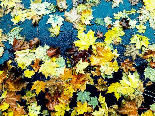 Październik pod nogami