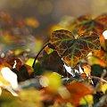 listkowo #liście #natura #rosliny
