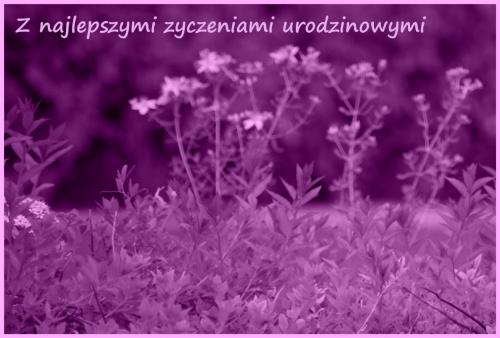 """Dla Heram z okazji urodzin """"Sto lat w zdrowiu!"""" :)"""