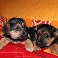 :)) #pieski #psiaki #zwierzęta