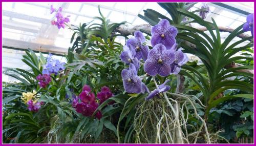 orchidea #przyroda #kwiaty