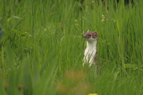 ...jeden z dzikich mieszkańców działki...