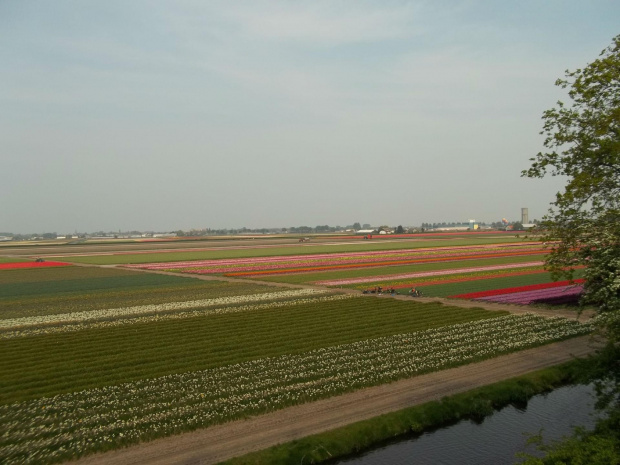 Keukenkenhof - Holandia