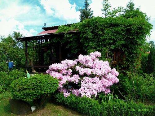 maj w moim zaczarowanym ogrodzie :)) **** ulub. stan48 **** #działka #kwiaty #maj #ogród #wiosna