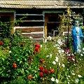 podkarpackie ogródki #ogrod #kwiaty #chaty #rzeźby