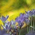 #bokeh #grzyby #kwiaty #liście #rośliny