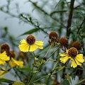 mój ogródkowy bałagan ... #jesień #kwiaty #ogród #trawy #dzielżany
