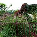 mój ogródkowy bałagan ... #jesień #kwiaty #ogród #trawy #piórkówka