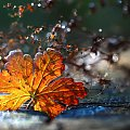 jesiennie ... #jesień #kwiaty #astry #liście #kolory