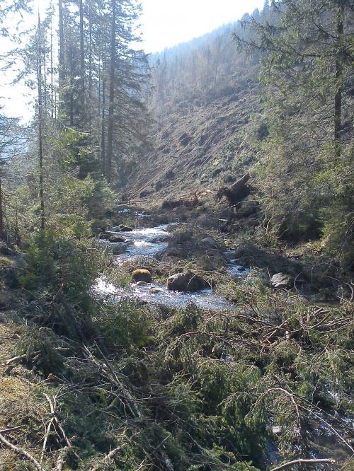 W Chochołowskiej #góry #Tatry #Zakopane