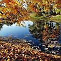 taką słoneczną i kolorową jesień lubię #jesień #natura
