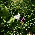 motyle #buterfly #motyl