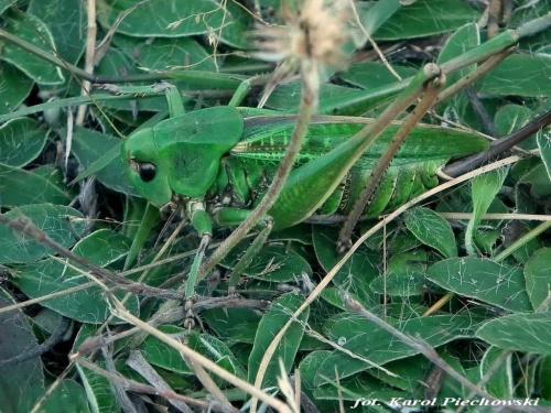 Mimikra .... zdjęcie mojego Męża #owady #przyroda