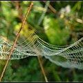 pajęczynka #krople #pajaki #PrawieJesień