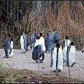 pingwiny #przyroda