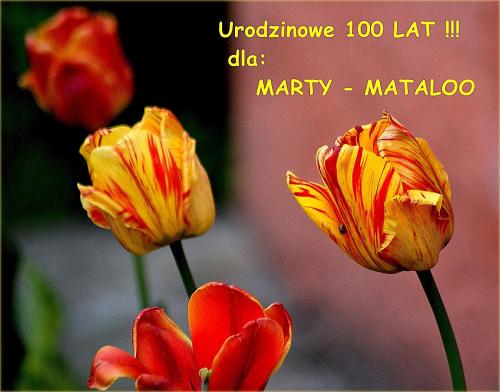 Abyś była uśmiechnięta w dniu tak ważnego święta ... abyś mimo biegu lat, zawsze kochała cały świat ... 100 LAT !!! #kwiaty #tulipany #urodziny #wiosna #życzenia