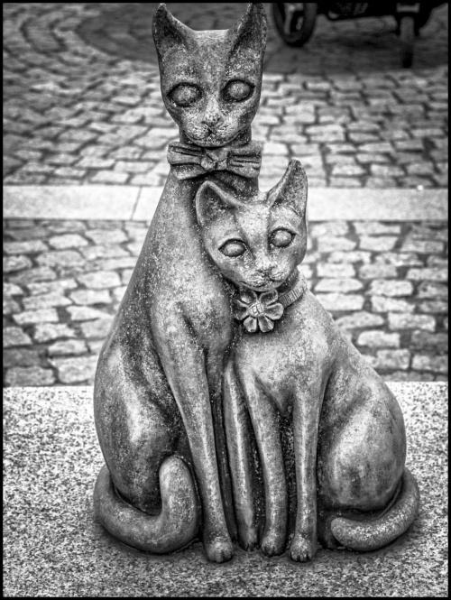 Trzebnica - KOTY z kocich gór - Młoda Para: Kociogórek i Lubuszka