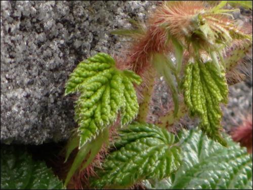 *** #roślinki