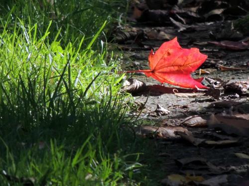 taki jesienny liśc ....tyle mi opowiedział ......